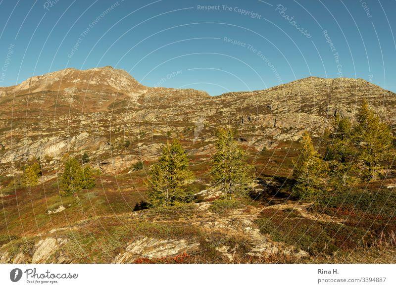 Berglandschaft mit Bäumen Alpen Himmel wolkenlos schönes Wetter Herbst Gipfel Landschaft Farbfoto Natur Felsen Schönes Wetter Berge u. Gebirge