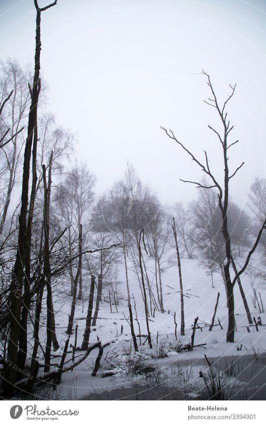 Karge Schneelandschaft Winter Gestrüpp Kälte eisig unwirtlich kalt Frost Natur Außenaufnahme Winterstimmung Wintertag Landschaft Winterwald Umwelt Wetter Wald