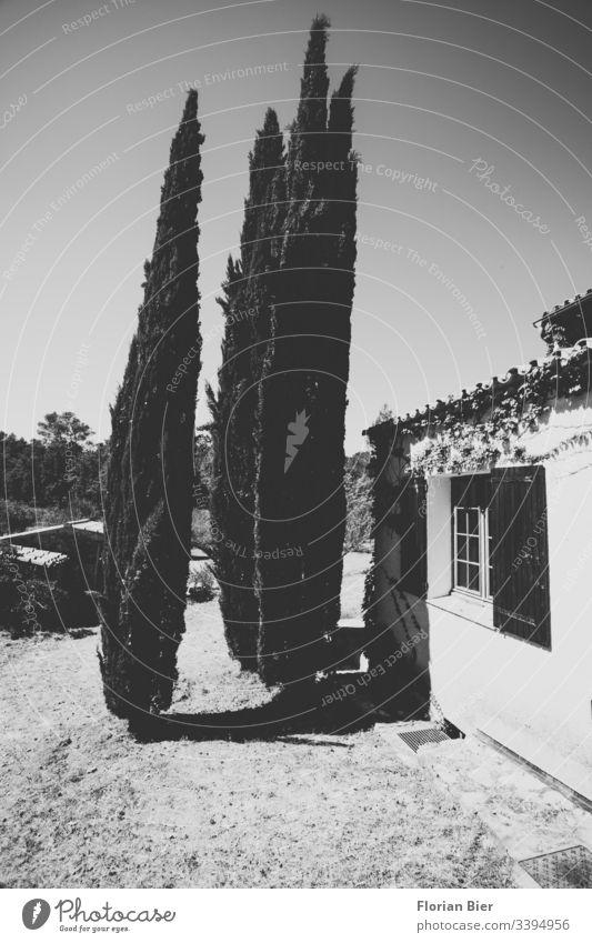 Drei Zypressen in einem Landhausgarten Garten Baum gepflegt Süden Frankreich Ruhe Ferienhaus Bäume Natur privat Sommer Grundstück Wiese Fenster Fensterladen