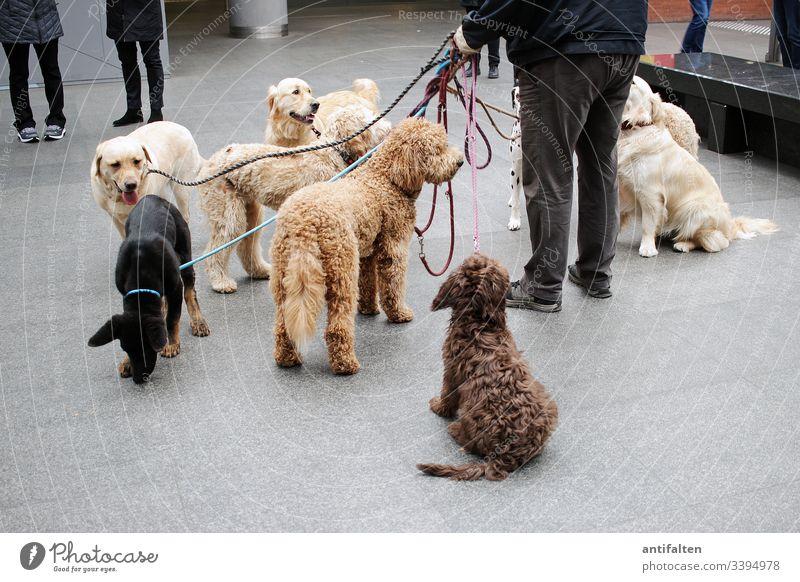 Keine Rudelbildung Hund Hunde Herrchen Mann Leine Beine Hundegruppe Haustier Tier Gassi gehen Innenaufnahme Bahnhof platz Farbfoto sitzen stehen braun