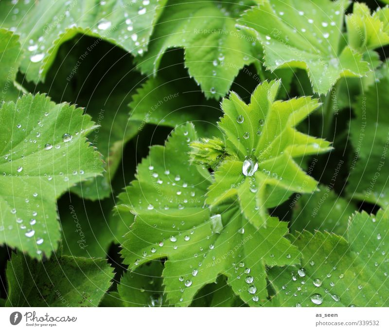 frisch! Natur grün schön Wasser Pflanze Sommer Erholung Blatt Umwelt Leben Frühling Garten Gesundheit natürlich Park Regen