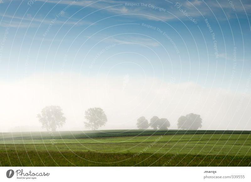 Sommerlich Ausflug Umwelt Natur Landschaft Urelemente Himmel Schönes Wetter Nebel Baum Park Wiese frisch schön Stimmung Beginn Leben Landwirtschaft
