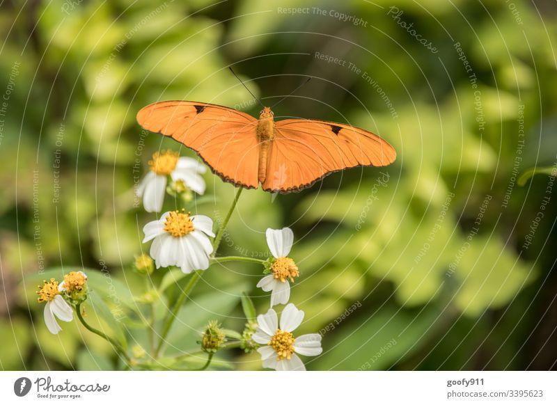Schmetterling Insekt Fühler Natur Nahaufnahme sitzen Tier Tierporträt Flügel Detailaufnahme filigran Farbfoto exotisch Pflanze Blüte Blatt fliegen Park
