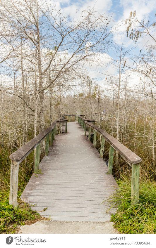 Weg ins Ungewisse Steg Holz Natur ruhig Außenaufnahme Landschaft Farbfoto Ferien & Urlaub & Reisen Ausflug Everglades NP Florida Baum Pflanze Wege & Pfade grün