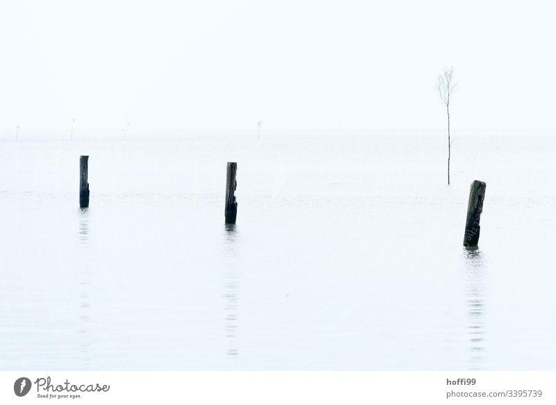 Pfähle im Wasser mit Nebel weißer Himmel Ebbe drei minimalistisch minimalistisches Muster Naturschutzgebiet Pfahl weißer Hintergrund Menschenleer Fahrrinne