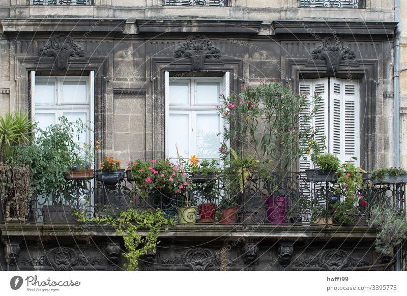 begrünter Balkon vor Fenster mit geschlossenen Fensterläden Zaun Pfeil Fensterladen Sprossenfenster Natursteinfassade Fassade Mauer Wand Jalousie Rollladen