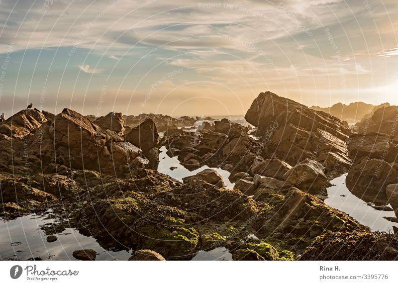 Sonnenuntergang am Atlantik Portugal Felsen Küste Strang sonnenuntergang Stimmungsvoll Himmel wolken schönes nasses Möven Porto