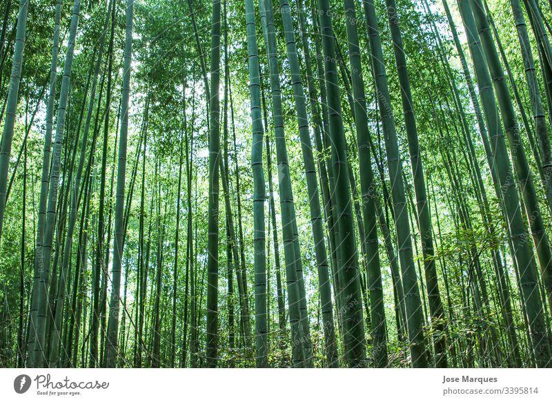 Bambuswald Wald grün Natur Japan reisen Urwald Außenaufnahme Umwelt