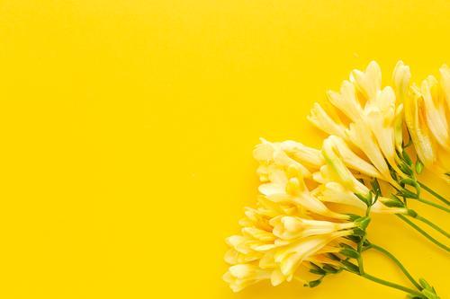 Wunderschöne Sträuße mit frischen Frühlingsblumen Blume Hintergrund Postkarte Blütenblätter Valentinsgruß Jahrestag Feier Liebe Romantik natürlich geblümt Natur