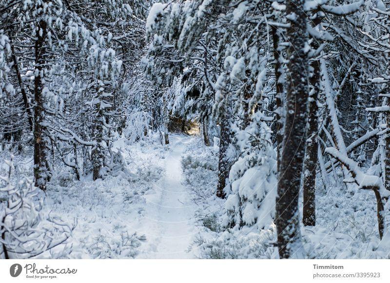 Warmes Licht am Ende eines frostigen Weges Winter Schnee frost snow Kälte Wege & Pfade Lichterscheinung Lichteinfall Sonnenlicht warm Baum Hoffnung Ziel