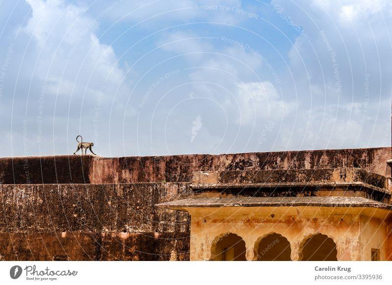Ein Affe bei seinem Gang über die riesigen Palastmauern Einsamkeit Indien Rajasthan Fort Reisen Exotik Entdeckung erkunden Himmel Asien Ferien & Urlaub & Reisen