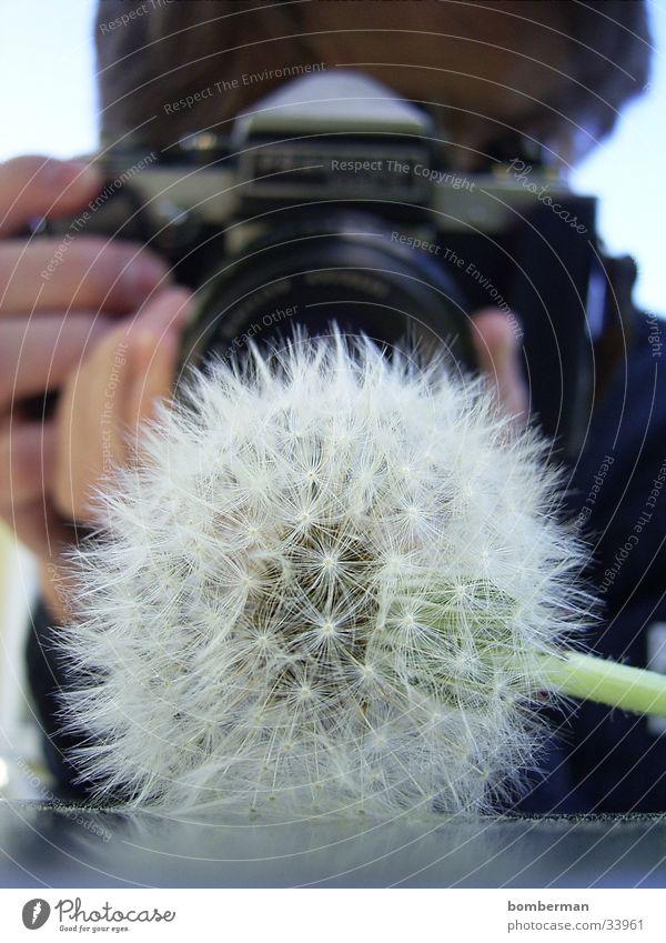 Der Fotograf mit der Pusteblume Fotokamera Löwenzahn Blume Fototechnik