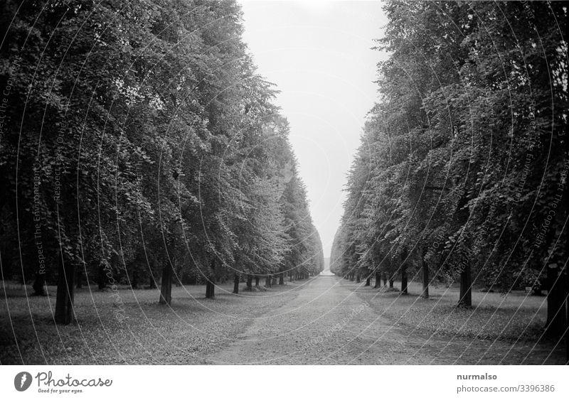 virtueller Corona Spaziergang Park analog Allee weg ziel perpektieve corna baüme laubbaum linde historisch kaiser potsdam flucht punkt