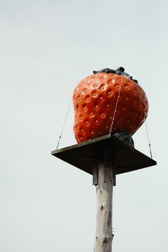 Erdbeere auf einem Holzpodest für Erdbeer-Verkaufsstand Erdbeeren Frucht rot Lebensmittel Farbfoto lecker Ernährung frisch Nahaufnahme Menschenleer