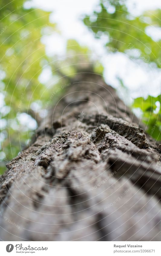 Niedriger Winkel eines Baumstammes, fokussiert im Vordergrund und seine grüne Tasse im Hintergrund und unscharf. Baumkrone Natur Wald Moos Holz niedriger Winkel