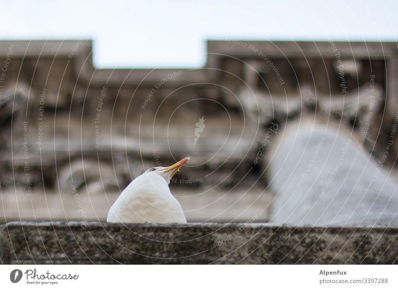 Desinteresse Möwe Möwenvögel Säule Bauwerk Außenaufnahme Tier Vogel Farbfoto Menschenleer Venedig Tierporträt Schwache Tiefenschärfe Tag Natur