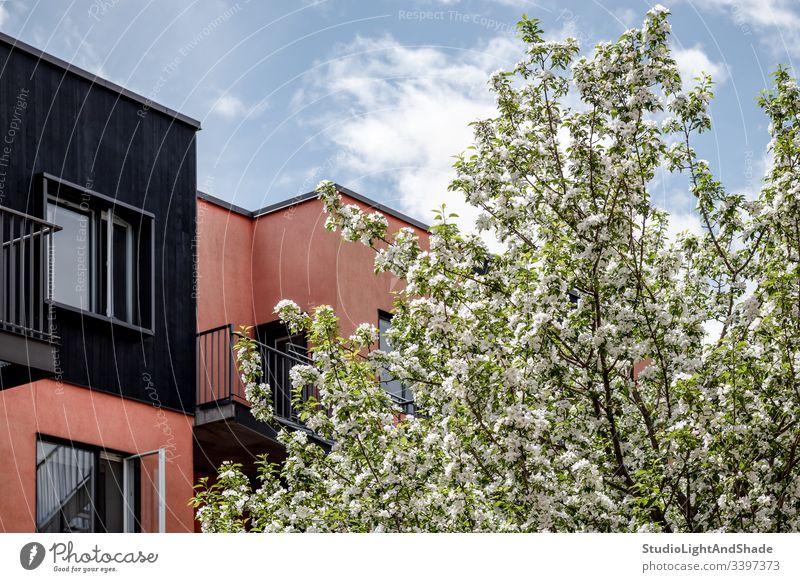 Blühender Baum, rosa Gebäude und blauer Himmel Haus heimwärts Bäume Blüte Frühling Ast Niederlassungen Blütezeit Überstrahlung Blumen Kirschbaum Apfelbaum