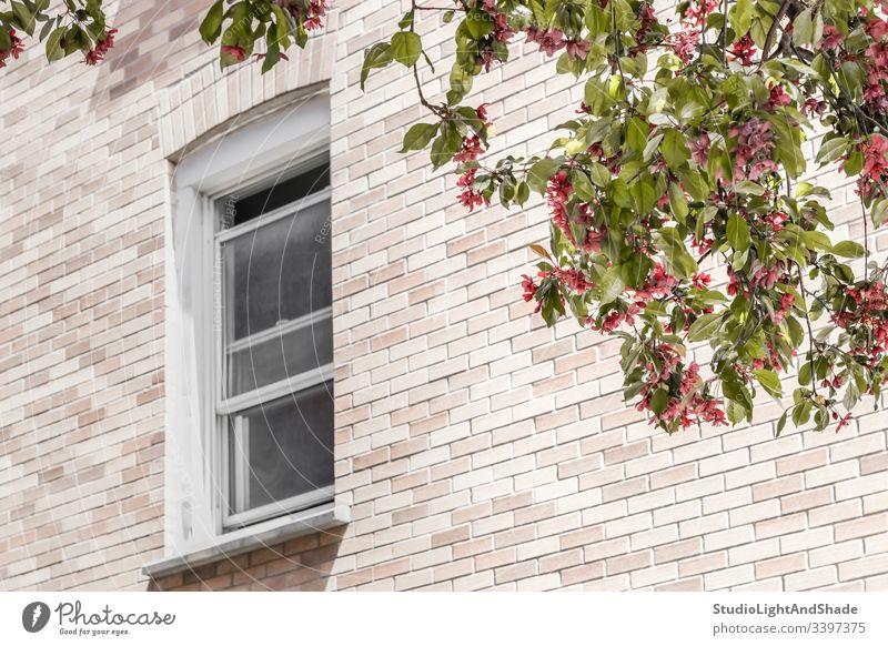 Fenster mit einer Ansicht über einen blühenden Baum Gebäude Haus heimwärts Baustein Wand Bäume Blüte Frühling Ast Niederlassungen Blühend Blütezeit