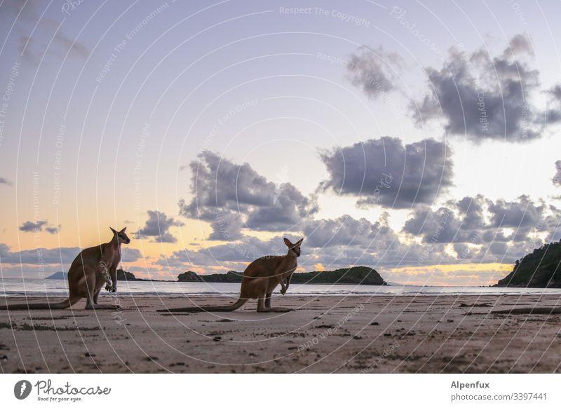 Urlaub Känguruh Australien Farbfoto Ferien & Urlaub & Reisen Strand Wasser Ozean Meer Küste Außenaufnahme Natur Himmel Sommer Landschaft Tourismus Wellen