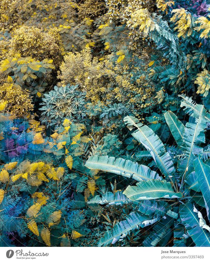 Dschungel mit Pflanzen in der Natur natürlich grün Botanik Detailaufnahme Nahaufnahme Urwald Makroaufnahme Hintergrundbild Florida tropisch