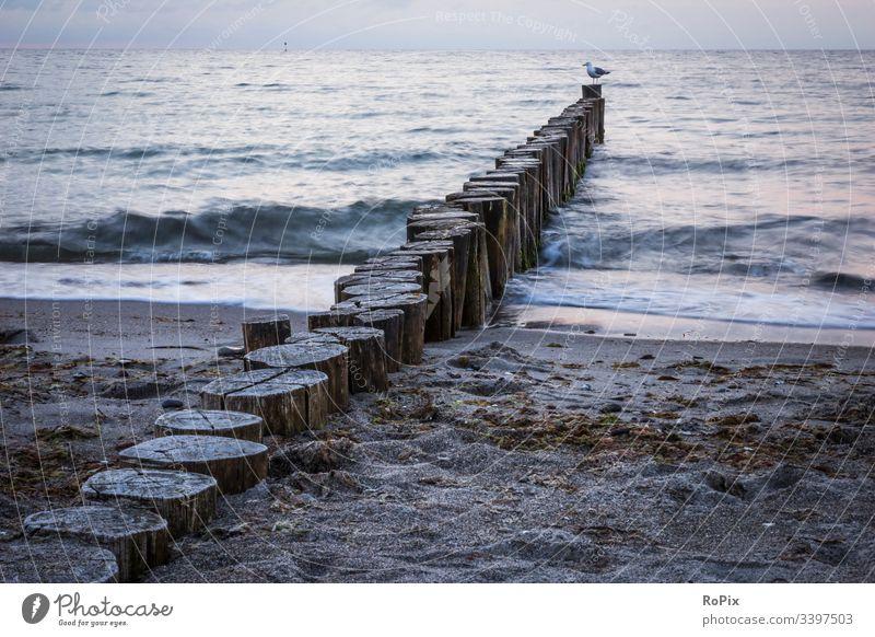 Abend am Ostseestrand Strand beach Küste Meer sea Ozean Sandstrand Buhnen Pfahl pfähle strandbefestigung Natur Naturgewalten Gezeiten tides Sommer Sommerurlaub