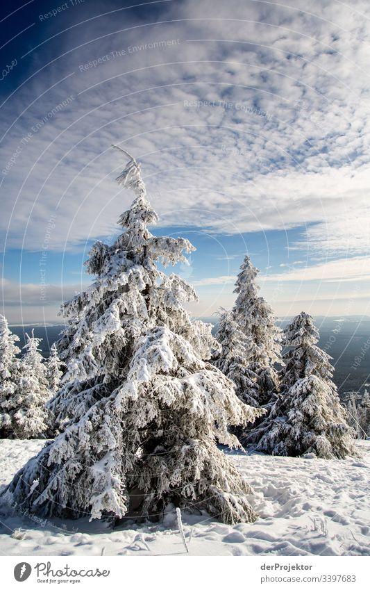 Harzer Winterlandschaft IV Ausflug Abenteuer Ferne Freiheit Ferien & Urlaub & Reisen Tourismus Winterurlaub wandern Umwelt Natur Schönes Wetter Pflanze
