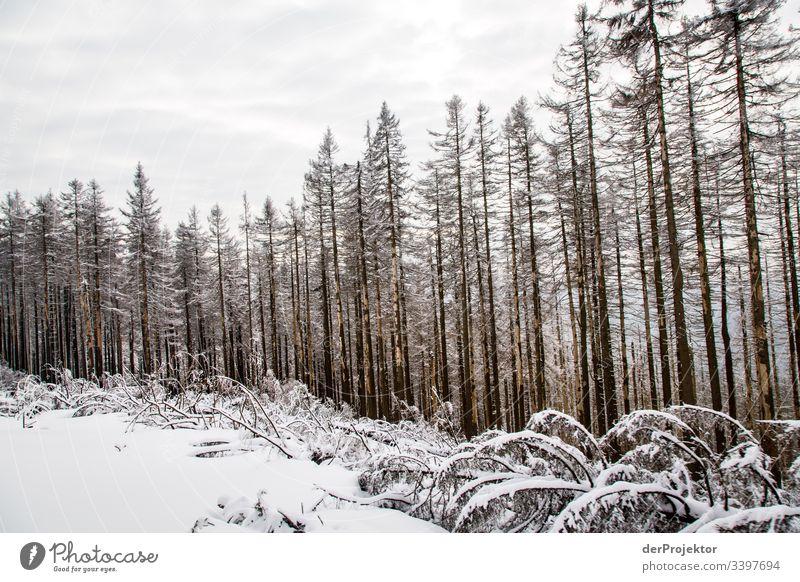 Harzer Winterlandschaft Weitwinkel Panorama (Aussicht) Zentralperspektive Starke Tiefenschärfe Licht Tag Textfreiraum Mitte Textfreiraum unten