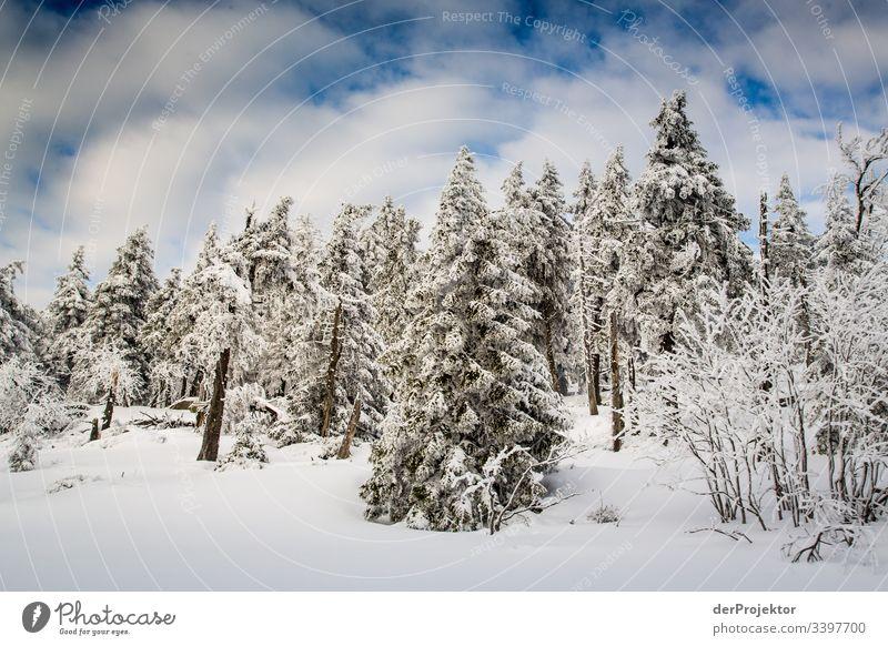 Harzer Winterlandschaft III Ausflug Abenteuer Ferne Freiheit Ferien & Urlaub & Reisen Tourismus Winterurlaub wandern Umwelt Natur Schönes Wetter Pflanze