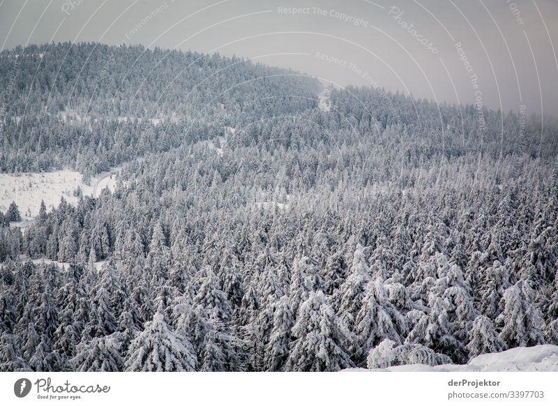 Harzer Winterlandschaft VI Ausflug Abenteuer Ferne Freiheit Ferien & Urlaub & Reisen Tourismus Winterurlaub wandern Umwelt Natur Schönes Wetter Pflanze