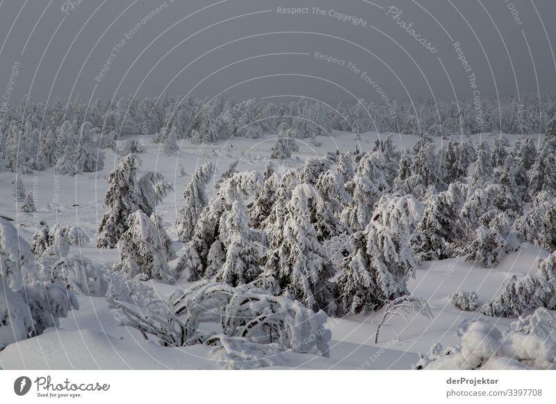 Harzer Winterlandschaft V Ausflug Abenteuer Ferne Freiheit Ferien & Urlaub & Reisen Tourismus Winterurlaub wandern Umwelt Natur Schönes Wetter Pflanze