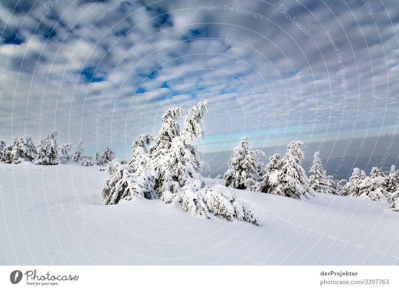 Harzer Winterlandschaft Ausflug Abenteuer Ferne Freiheit Ferien & Urlaub & Reisen Tourismus Winterurlaub wandern Umwelt Natur Schönes Wetter Pflanze Landschaft