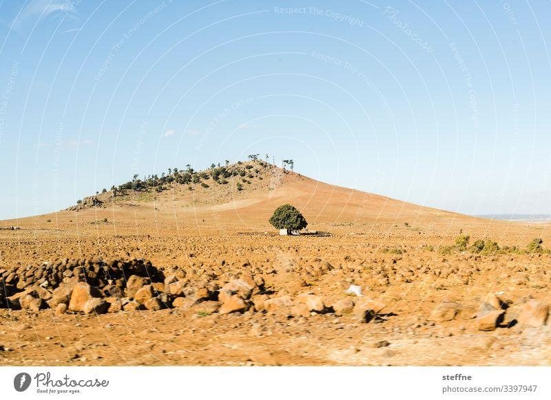 einsamer Baum vor Hügel Geröll Schönes Wetter Bewegungsunschärfe Hitze