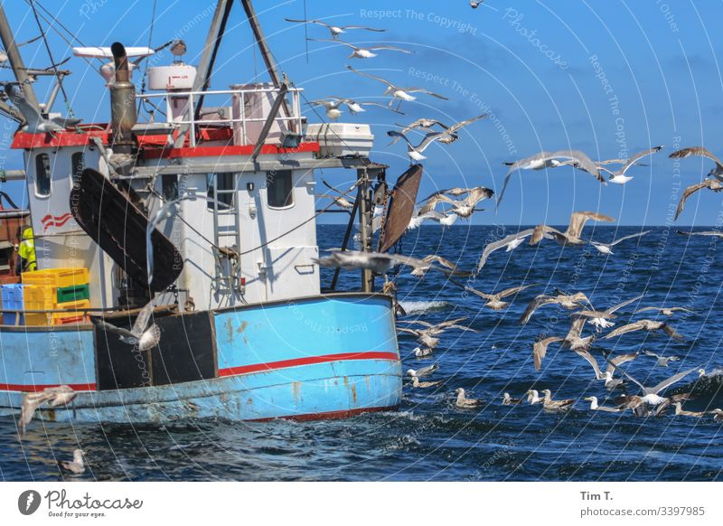 Heimfahrt Ostsee Kutter fischkutter Möwe Farbfoto Vogel Küste Außenaufnahme Meer Menschenleer Natur Tier Wasser Tag Umwelt Wellen Flügel Tiergruppe blau fliegen