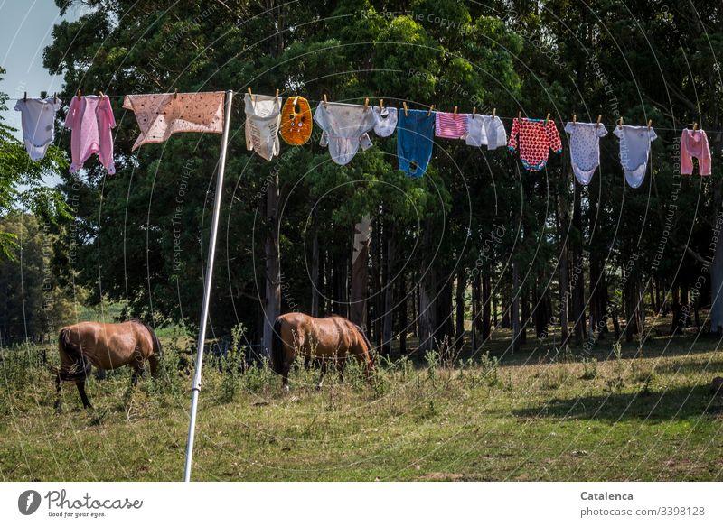 Seilschaft | Babywäsche hängt in der sommerlichen Brise zum trocknen, zwei Pferde grasen im Hintergrund Wäscheleine Farbfoto Bekleidung Menschenleer