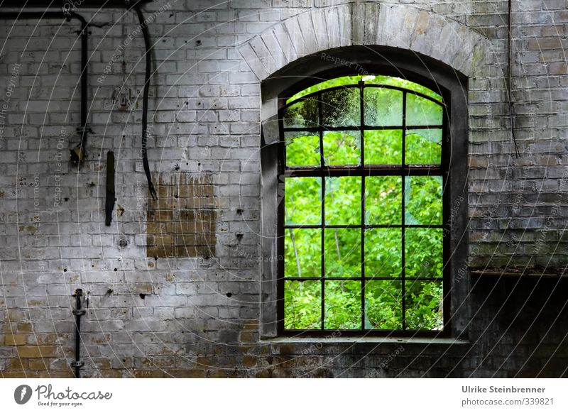 Ins Grüne II / AST 5 Beelitz Natur alt grün Sommer Fenster Wand Architektur Mauer Gebäude grau Stein Garten Metall Park leuchten Sträucher