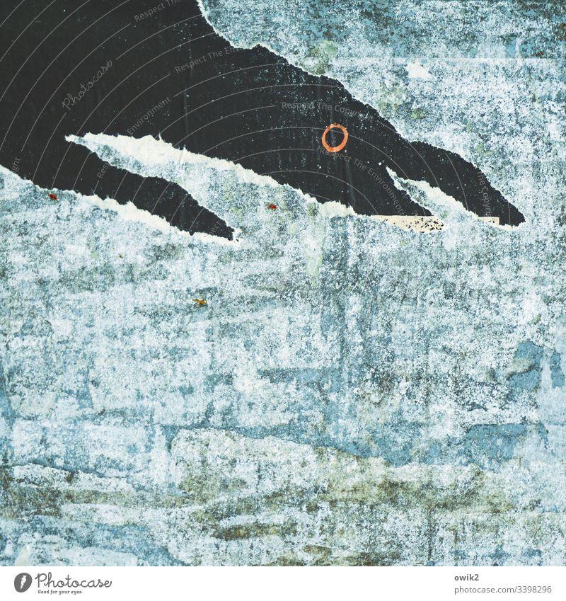 Fressfeind Litfaßsäule Detailaufnahme Papier Riss Abriss Silhouette Gesicht Gesichtsausdruck Auge Mund Unterlippe Nase Profil erschrocken Schwimmen & Baden blau