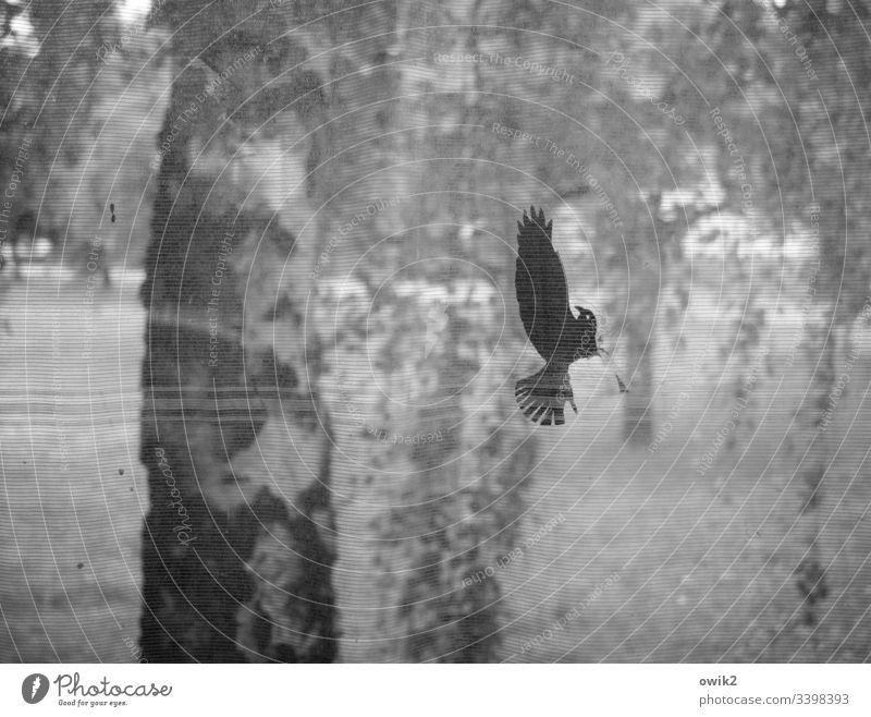 Gefallener Engel Buchaltestelle Außenaufnahme Glasscheibe Aufkleber Detail durchsichtig Vogel Absturz beschädigt verwundet hilflos schwache Tiefenschärft
