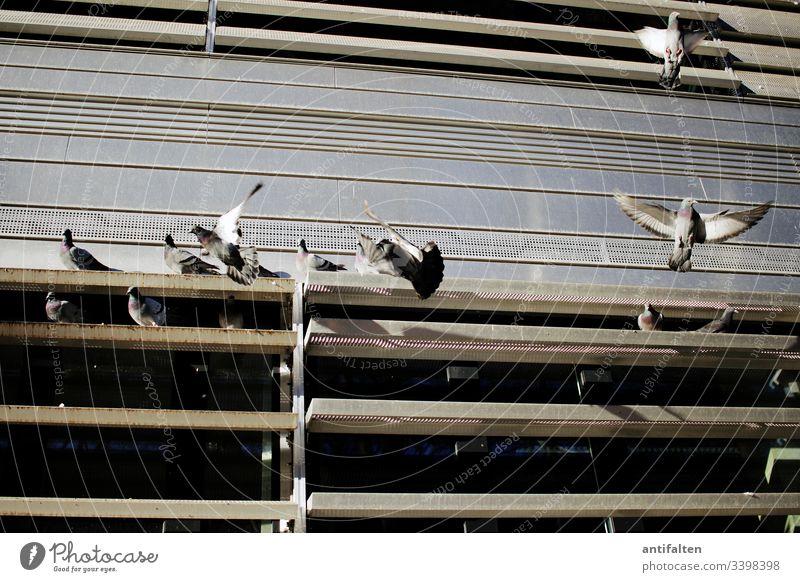 Taubenschlag Feder Flügel fliegen Vogel Freiheit Schnabel Fassade Gebäude Bürogebäude Universität Lamellenjalousie Tag Frieden Tier Außenaufnahme Friedenstaube