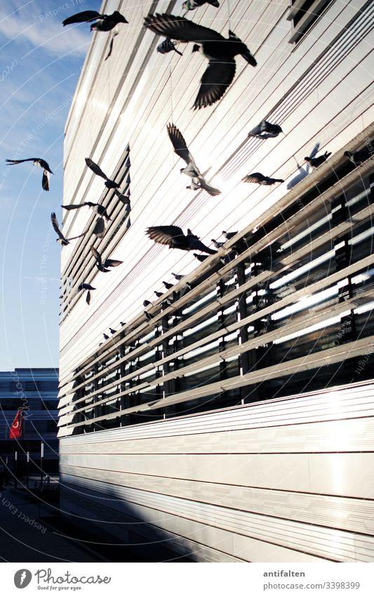 Unruhe Taubenschlag tauben flug fliegen Flügel Fassade Fassadenverkleidung Vogel Tier Farbfoto Himmel Tag Natur Freiheit Feder Schnabel Vogelflug Außenaufnahme