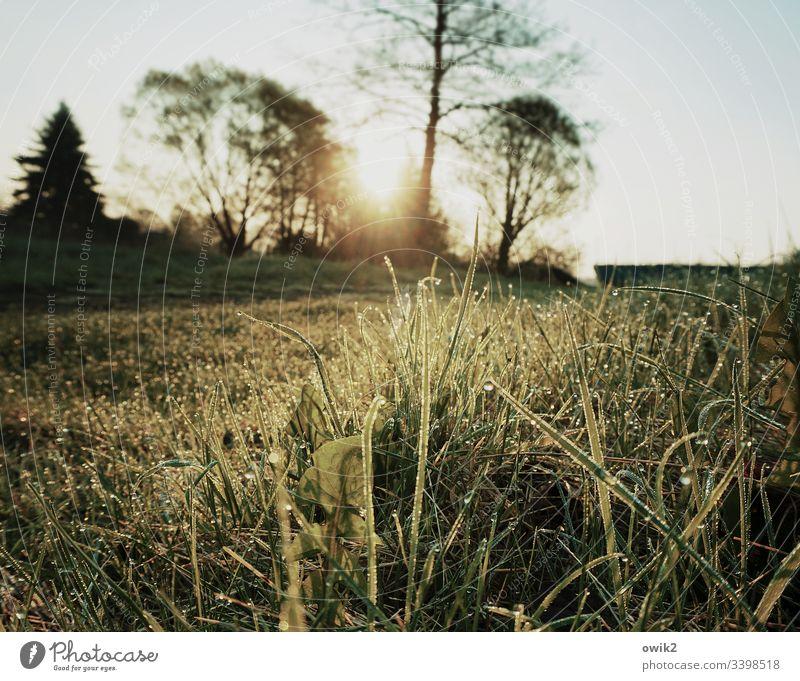 Nasse Halme im Gegenlichte Wiese Gras nass Wasser Wassretropfen Idylle Morgentau Makroaufnahme Nahaufnahme Natur grün Pflanze Umwelt feucht Detailaufnahme