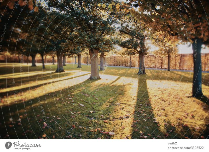 Lange Schatten Bäume natur Umwelt Park Hannover Herrenhäuser Gärten Gegenlicht Sonnenlicht lang Striche Ordnung Reih und Glied Barock Wiese Rasen gepflegt