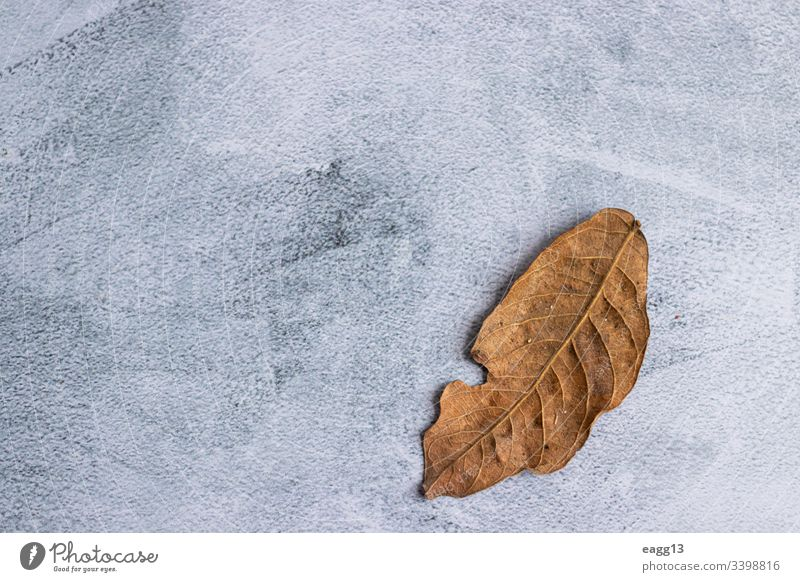 Marmorierter grauer Hintergrund mit getrockneten Blättern am Rand Verlassen Herbst herbstlich Hintergründe Charge schön Schönheit Botanik hell braun Nahaufnahme
