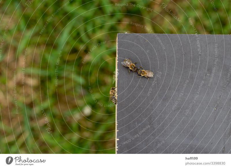 drei Bienen auf einem Bienenstock Insekt Imker Honigbiene Tier Imkerei Bienenkorb Kolonie Bienenzucht Arbeit & Erwerbstätigkeit Lebensmittel Bauernhof natürlich
