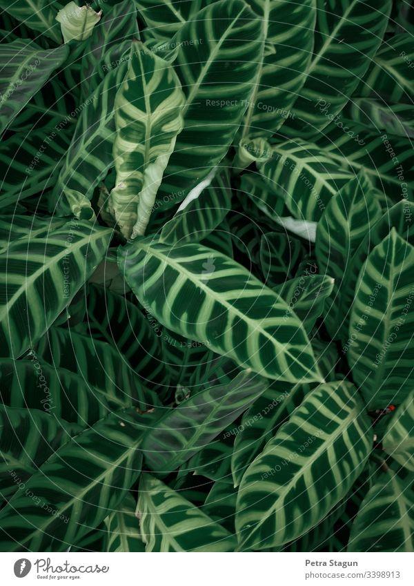 Tropische Zimmerpflanzen Vogelperspektive Schwache Tiefenschärfe Kontrast Abend Muster Makroaufnahme Detailaufnahme Nahaufnahme Außenaufnahme Farbfoto