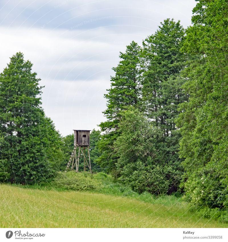 Hochsitz in der Landschaft Mecklenburg-Vorpommerns, Deutschland Jagd Wiese Bäume Natur menschenleer Zaun Hochstand Jägersitz Jagdrevier jagen Gras Tarnung Tag