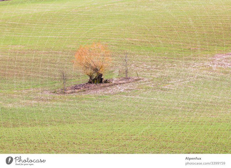einsame Insel Feld Ackerland Ackerbau Natur Landschaft grün Landwirtschaft ländlich Außenaufnahme Wiese Baum Umwelt Menschenleer Wachstum Farbfoto Gras