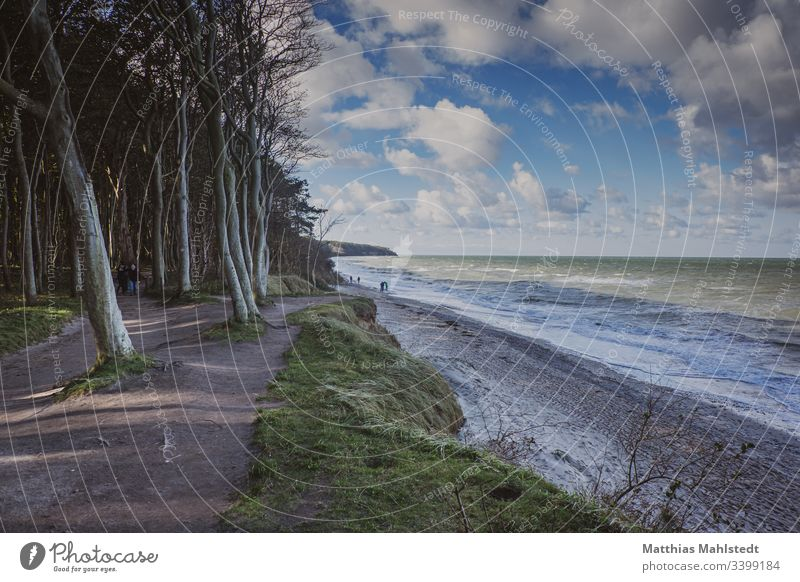 Am Strand von Warnemünde Baum Draußen Holz Klippe Kontrastreich Natur Pflanze Reisen Sand Meer Ferien & Urlaub & Reisen Wasser Küste Außenaufnahme Landschaft