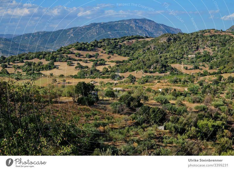 Landschaft auf Sardinien Berge Gebirge Bäume Felder Äcker Landwirtschaft Ackerbau ländlich Hütten Hügelkette hügelig bewaldet Natur grün Umwelt