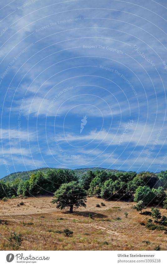 Hoher Sommerhimmel über sardischer Landschaft Sardinien Himmel Schleierwolken Wald Baum trocken Sommerhitze Wassermangel Weide ausgetrocknet vertrocknet