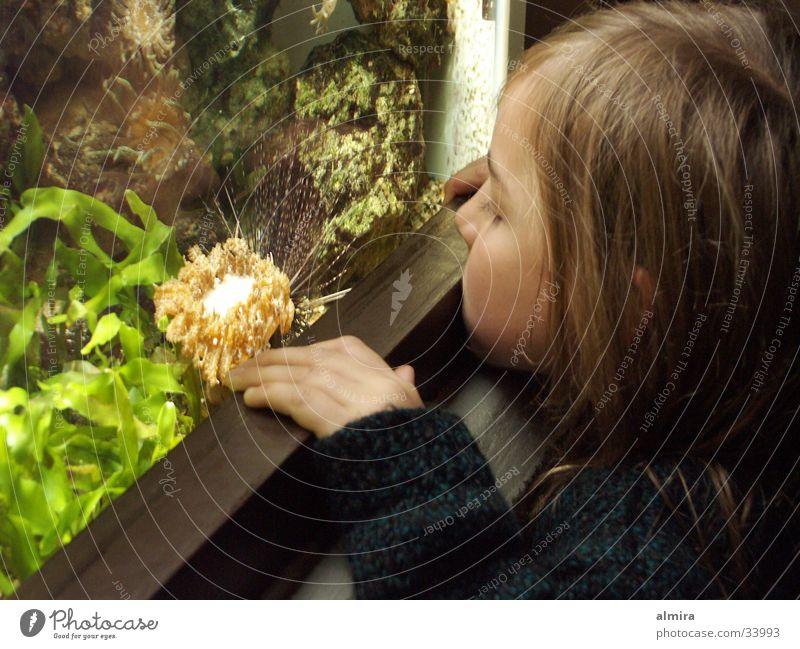 Seeigel ganz nah Mensch Kind Wasser Mädchen grün Glas Fisch beobachten Zoo entdecken Aquarium Algen Seeigel